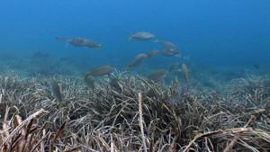 La alteración de las praderas submarinas
